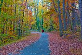 Colorful trees foliage along pathway in the National Arboretum Washington DC