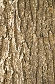 Tree Rinkd