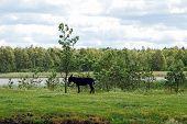 Donkey In The Grutas Park Near Druskininkai Town