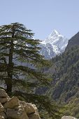 Himalayan fir and mountain