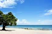 Mango Tree on the Beach on a Sunny Day, Chintheche Beach, Lake Malawi, Africa