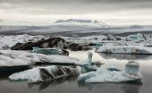 Glacier And Icebergs In Iceland
