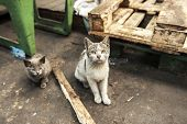 Dirty street cats sitting in factory