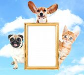 Cute and funny pets with frame on sky background