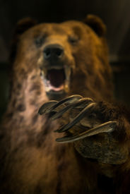 foto of claw  - Dangerous bear ready to hunt with scary claws