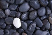 pic of quartz  - Individuality concept with a full frame background of weathered smooth black basalt pebbles with a single different white quartz stone - JPG