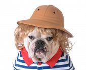 image of dog clothes  - dog wearing clothing  - JPG