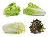 stock photo of iceberg lettuce  - lettuce chinese cabbage on a white background - JPG