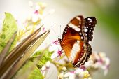 picture of tame  - 