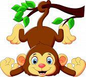 image of baby-monkey  - Vector illustration of Cartoon funny monkey on a tree - JPG