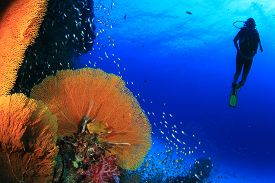 image of under sea  - Scuba diving on coral reef in sea - JPG