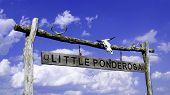 Lil Ponderosa