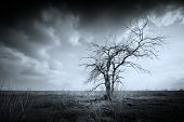 stock photo of dead plant  - Lonely dead tree - JPG
