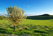 Spring tree in green meadow. Nature composition.