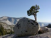 Boulders And Tree