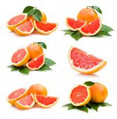grapefruits collection