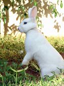 The Easter bunny portrait. White rabbit on a patch of green grass. Noise removed, no sharpening appl