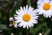 Flores silvestres en el jardín en la primavera
