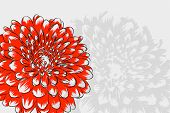 beautiful Floral vector background (flowers on white)