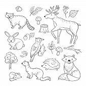 Sketch Forest Animals. Woodland Cute Baby Animal Raccoon Elk Hare Woodpecker Hedgehog Marten Fox Chi poster
