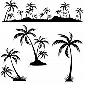 Set Of Palm Trees. Coconut Palm Trees Isolated On White Background. poster