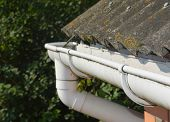 Roof Gutter. House Asbestos Roof With Plastic Roof Gutter Pipe. House Guttering With Holders And Old poster