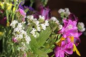 A Wonderful Bouquet Of Purple And Yellow Wild Flowers. Small Field Flowers. White Wildflowers In A B poster