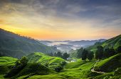 Nature Composition, Stunning Sunrise Over The Tea Plantation At Cameron Highlands, Malaysia poster