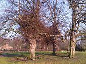 Árvores de dança
