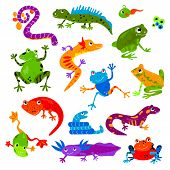 Reptile Vector Animal Reptilian Amphibian Froggy Character Lizard Turtle Iguana And Chameleon Pet Il poster