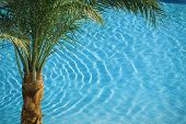 Palm On Blue Pool