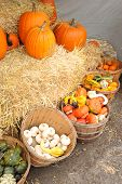 Bushel baskets of gourds and pumpkins on hay