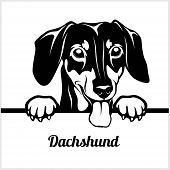 Dachshund - Peeking Dogs - - Breed Face Head Isolated On White poster