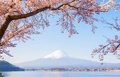 Fuji Mountain Landscape. Travel And Sightseeing In Japan On Holiday. Sakura Flower In Spring And Sum poster