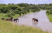 An Elephant Walks Across A River To Elephants And Baby Elephants Ready To Cross River poster