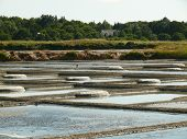 Salt production in salt marsh