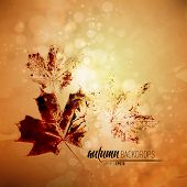 Autumn Background with Nature Printing of Fallen Leaves | Vector EPS10 with organized layers