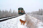 Rothaarige Hund in der Nähe von Zug