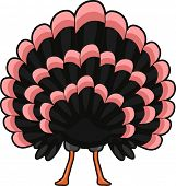 Illustration of a Turkey with its Tail Spread Wide