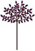 Baby Purple Tree
