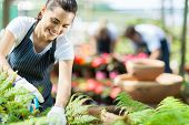 stock photo of prunes  - beautiful female nursery worker working in greenhouse - JPG