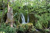 Cascade In Forest (Plitvice Lakes)