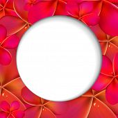 Pink Frangipani Shere, Isolated On White Background, Vector Illustration