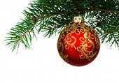 Small red bauble on green christmas firtree on white background