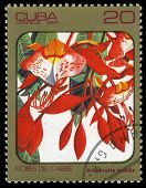 Cuba - Circa 1984: Post Stamp Printed In Cuba Shows Image Of Amherstia Nobilis From Caribbean Flower