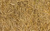 Background Of Hay And Dry Grass