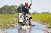 foto of dick  - woman in a canoe in the okavnago delte botswana - JPG