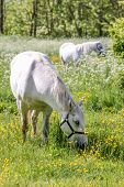 White Horse On Green Pasture
