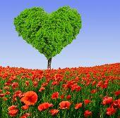 poppy field with tree from the shape heart