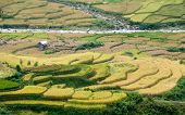 Small Stream Flowing Through Terraced Fields, Mu Cang Chai District, Yen Bai Province, Vietnam